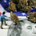 Why You Should Consider a Career in the Marijuana Industry
